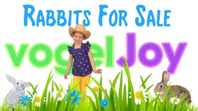 Rabbits For Sale - vogeljoy